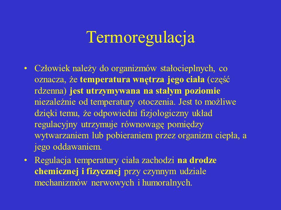 Termoregulacja Człowiek należy do organizmów stałocieplnych, co oznacza, że temperatura wnętrza jego ciała (część rdzenna) jest utrzymywana na stałym