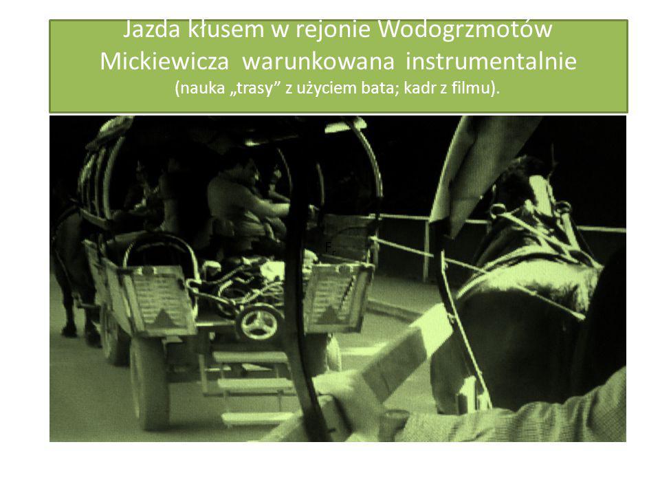 """Jazda kłusem w rejonie Wodogrzmotów Mickiewicza warunkowana instrumentalnie (nauka """"trasy"""" z użyciem bata; kadr z filmu). FrFr"""