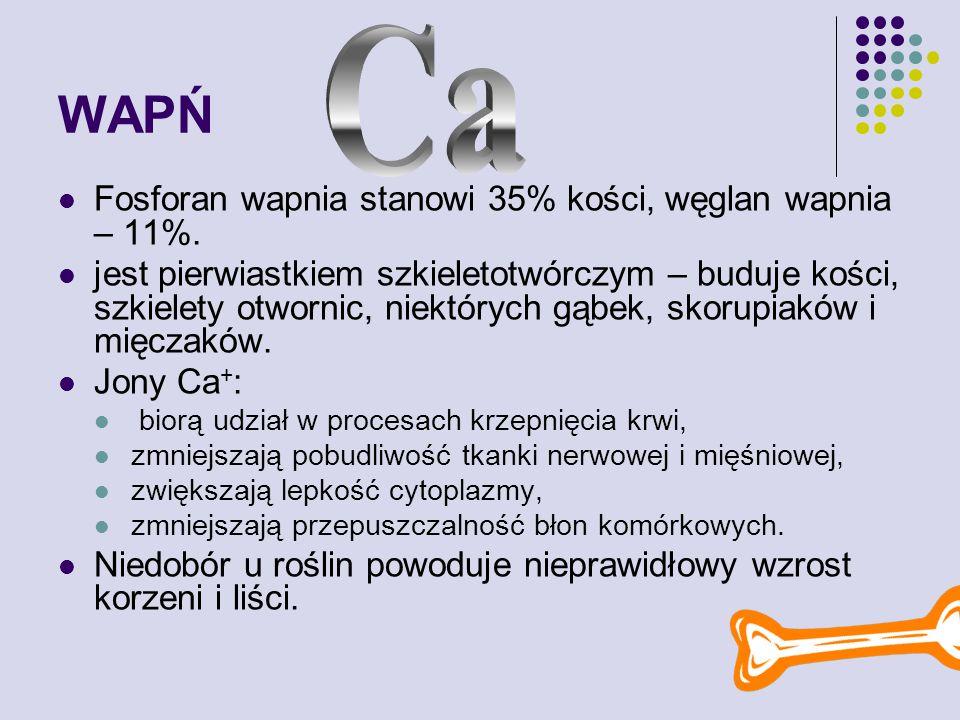 WAPŃ Fosforan wapnia stanowi 35% kości, węglan wapnia – 11%.