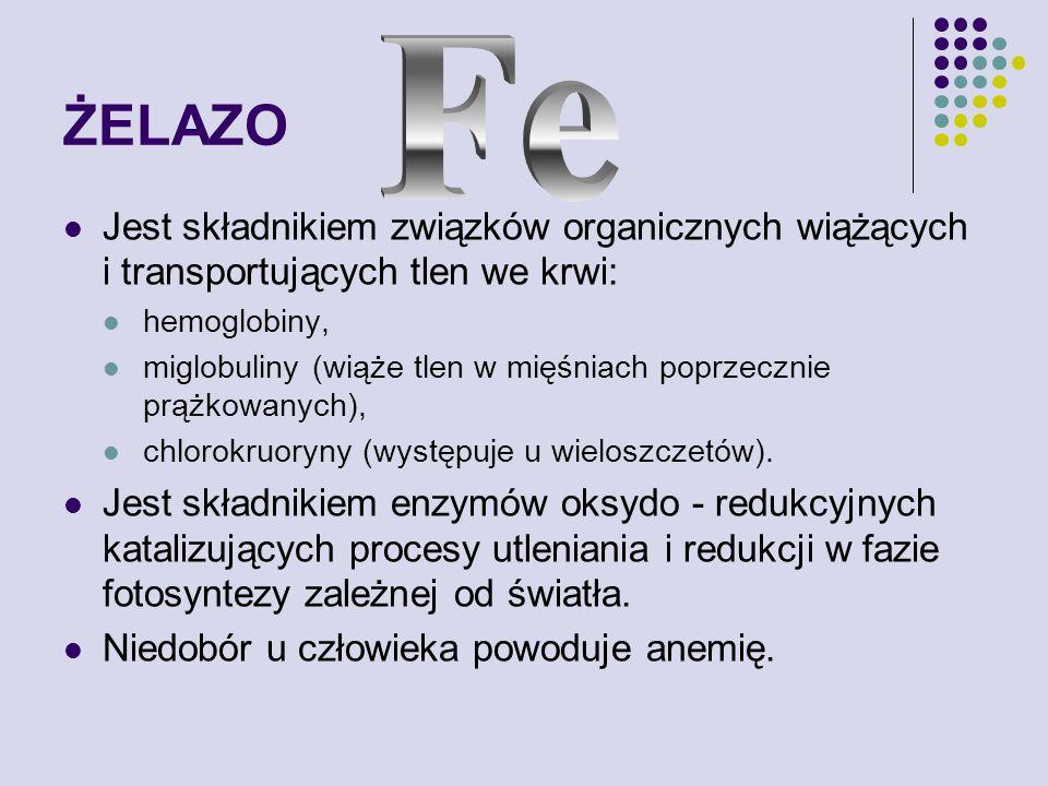 ŻELAZO Jest składnikiem związków organicznych wiążących i transportujących tlen we krwi: hemoglobiny, miglobuliny (wiąże tlen w mięśniach poprzecznie prążkowanych), chlorokruoryny (występuje u wieloszczetów).
