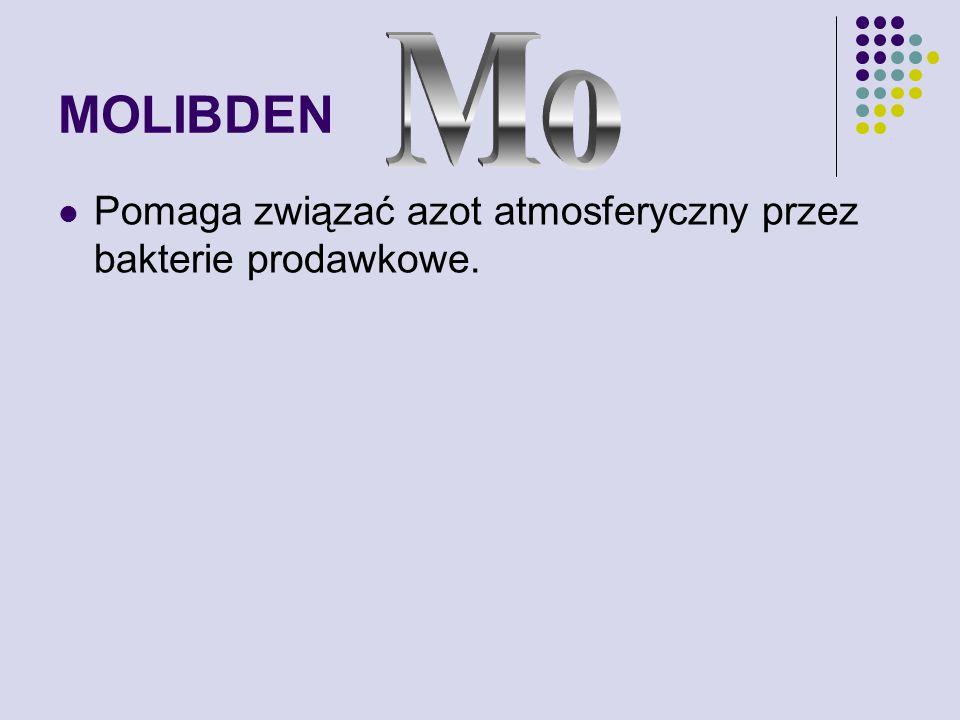 MOLIBDEN Pomaga związać azot atmosferyczny przez bakterie prodawkowe.