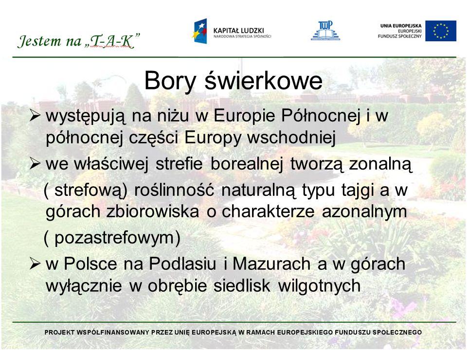 Bory świerkowe  występują na niżu w Europie Północnej i w północnej części Europy wschodniej  we właściwej strefie borealnej tworzą zonalną ( strefo