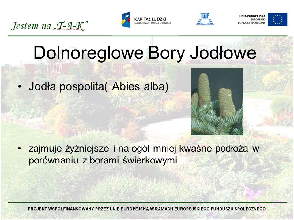 Dolnoreglowe Bory Jodłowe Jodła pospolita( Abies alba) zajmuje żyźniejsze i na ogół mniej kwaśne podłoża w porównaniu z borami świerkowymi