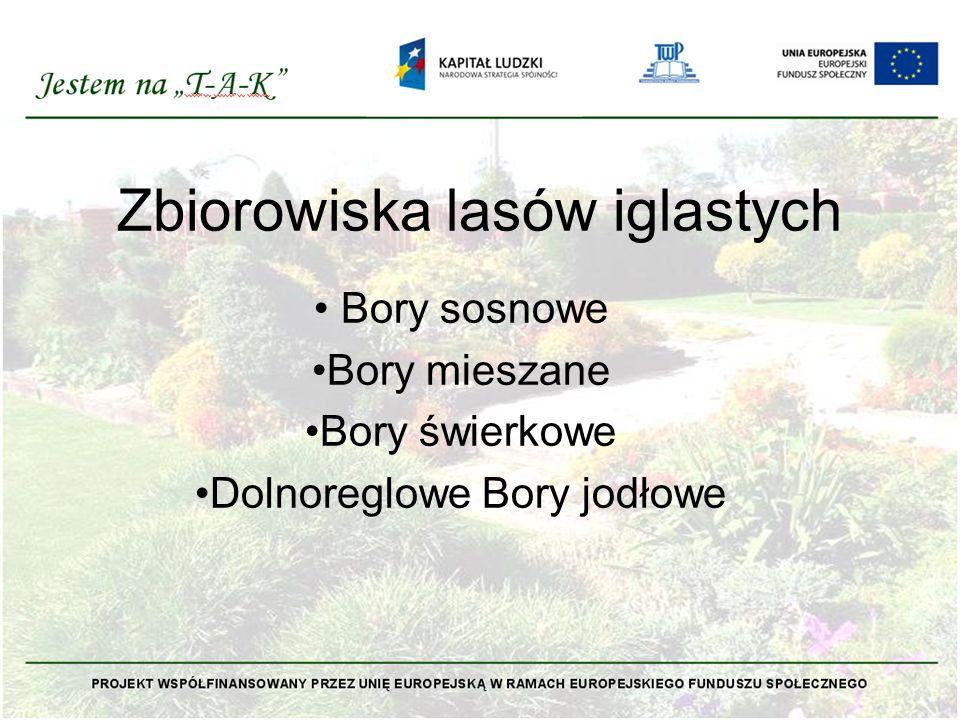 Zbiorowiska lasów iglastych Bory sosnowe Bory mieszane Bory świerkowe Dolnoreglowe Bory jodłowe