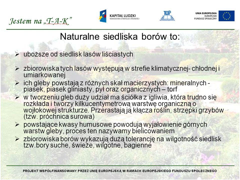 Naturalne siedliska borów to:  uboższe od siedlisk lasów liściastych  zbiorowiska tych lasów występują w strefie klimatycznej- chłodnej i umiarkowan