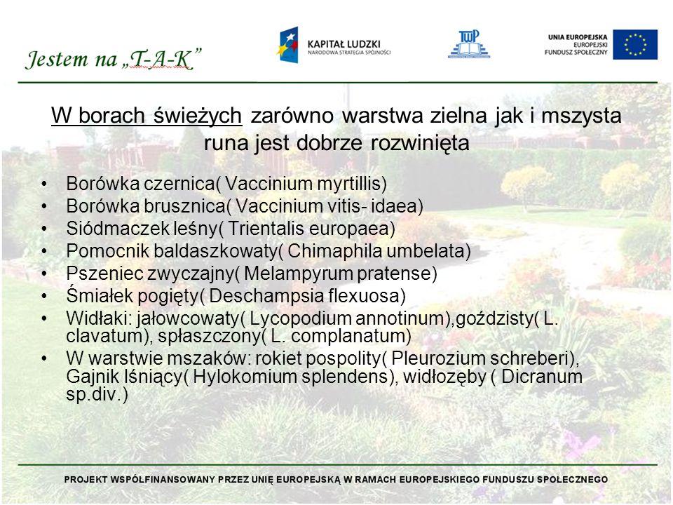 W borach świeżych zarówno warstwa zielna jak i mszysta runa jest dobrze rozwinięta Borówka czernica( Vaccinium myrtillis) Borówka brusznica( Vaccinium