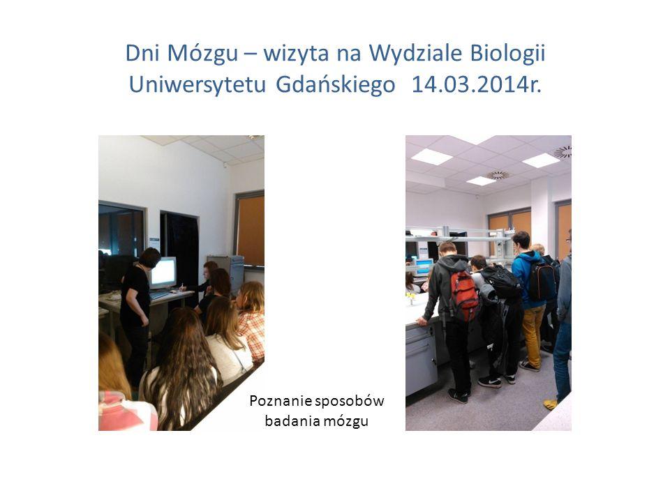 Dni Mózgu – wizyta na Wydziale Biologii Uniwersytetu Gdańskiego 14.03.2014r. Poznanie sposobów badania mózgu