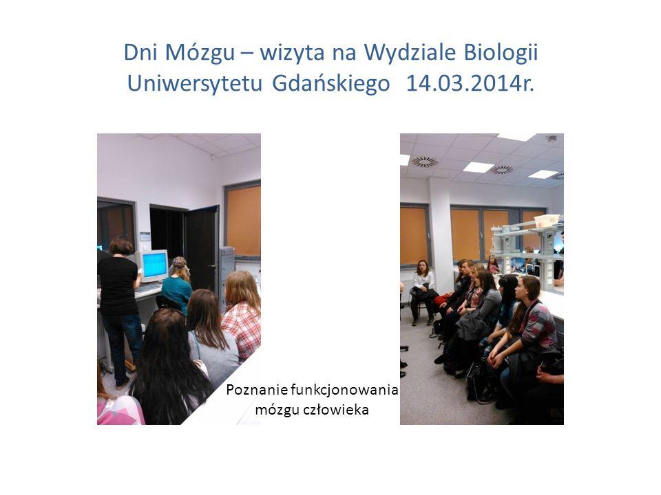 Dni Mózgu – wizyta na Wydziale Biologii Uniwersytetu Gdańskiego 14.03.2014r. Poznanie funkcjonowania mózgu człowieka