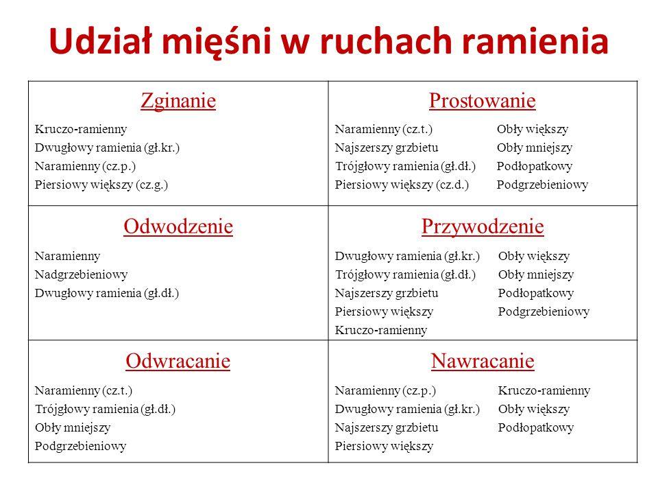 Udział mięśni w ruchach ramienia ZginanieProstowanie Kruczo-ramienny Dwugłowy ramienia (gł.kr.) Naramienny (cz.p.) Piersiowy większy (cz.g.) Naramienn