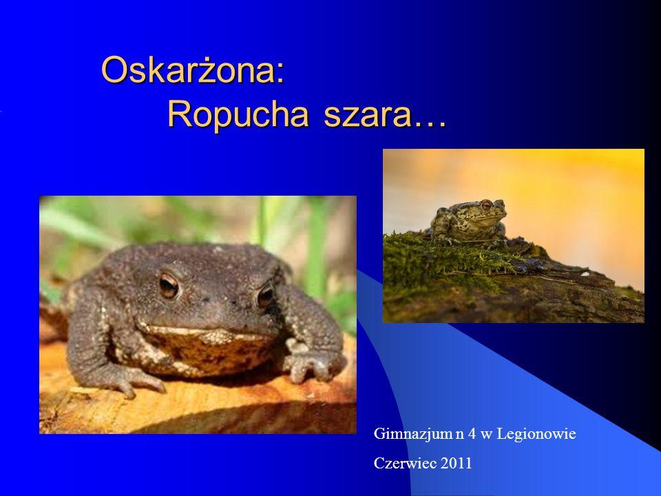 Oskarżona: Ropucha szara… Gimnazjum n 4 w Legionowie Czerwiec 2011