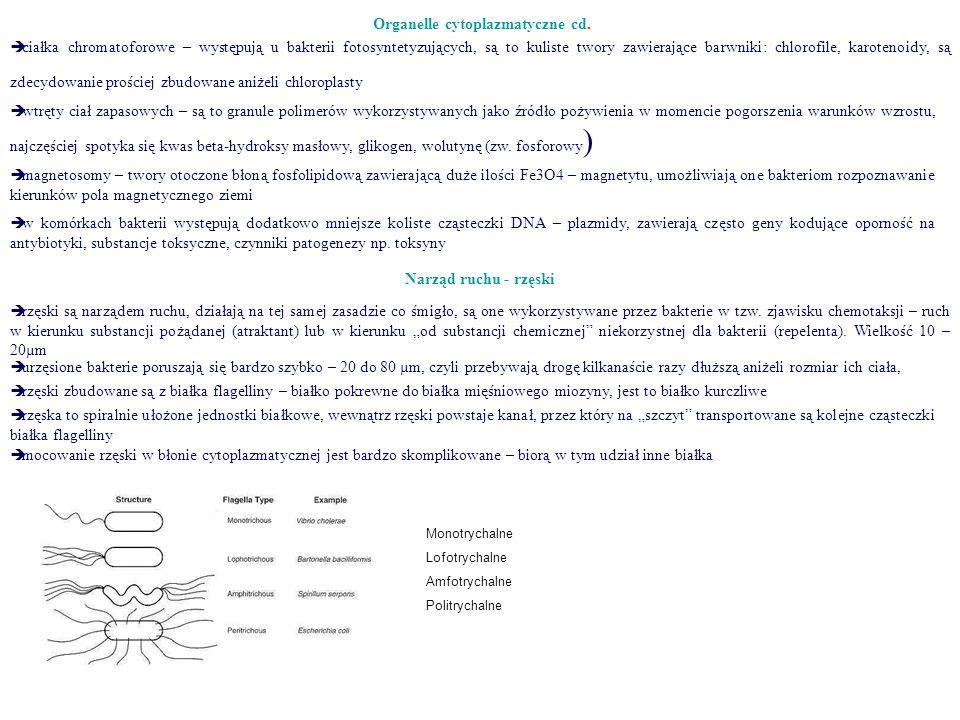 Organelle cytoplazmatyczne cd.