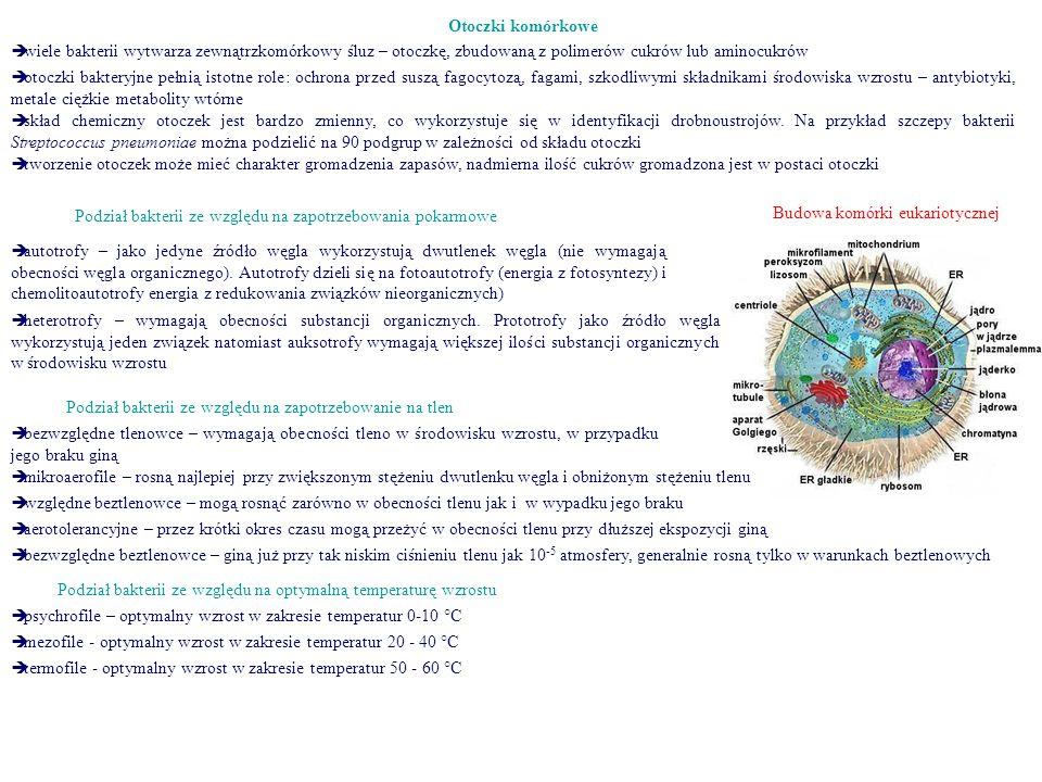 Otoczki komórkowe  wiele bakterii wytwarza zewnątrzkomórkowy śluz – otoczkę, zbudowaną z polimerów cukrów lub aminocukrów  otoczki bakteryjne pełnią