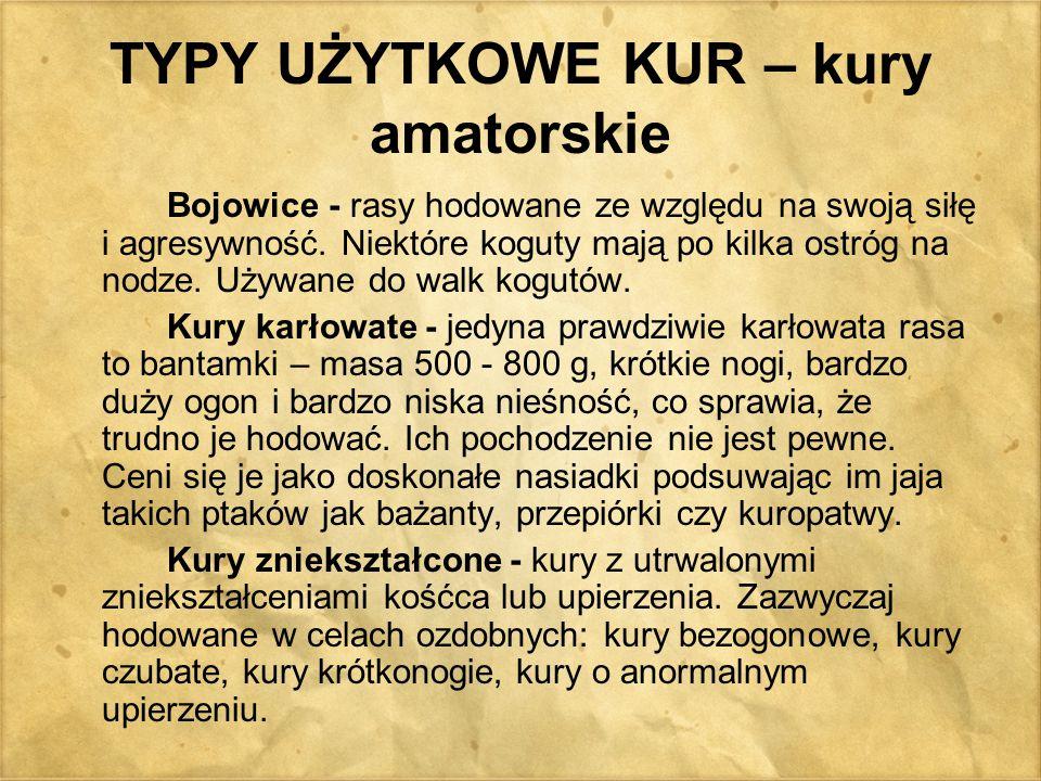 TYPY UŻYTKOWE KUR – kury amatorskie Bojowice - rasy hodowane ze względu na swoją siłę i agresywność. Niektóre koguty mają po kilka ostróg na nodze. Uż