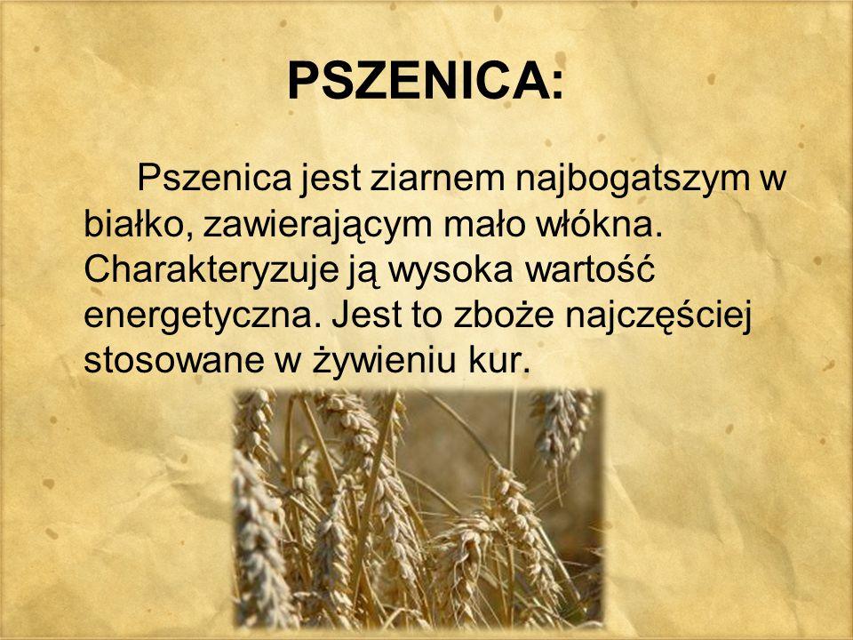 PSZENICA: Pszenica jest ziarnem najbogatszym w białko, zawierającym mało włókna. Charakteryzuje ją wysoka wartość energetyczna. Jest to zboże najczęśc