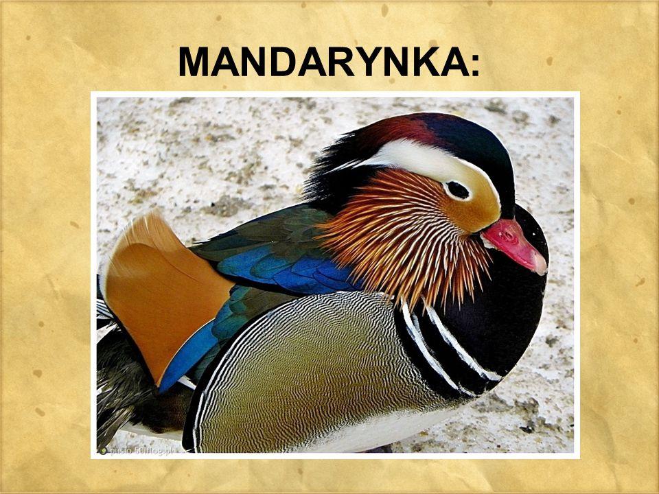 MANDARYNKA: