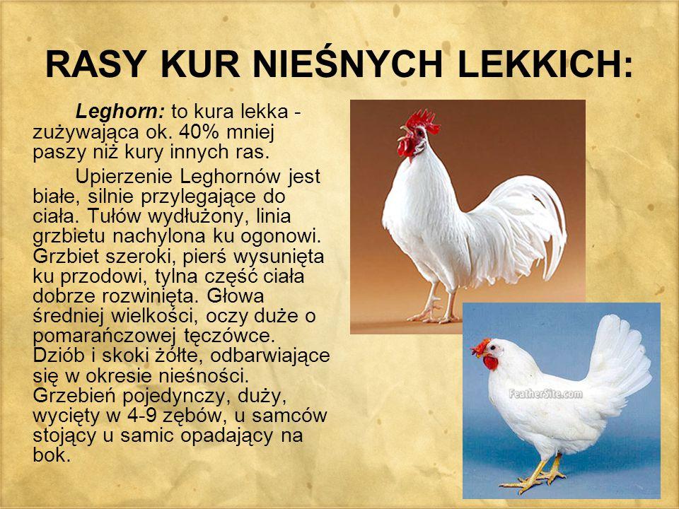 RASY KUR NIEŚNYCH LEKKICH: Leghorn: to kura lekka - zużywająca ok. 40% mniej paszy niż kury innych ras. Upierzenie Leghornów jest białe, silnie przyle