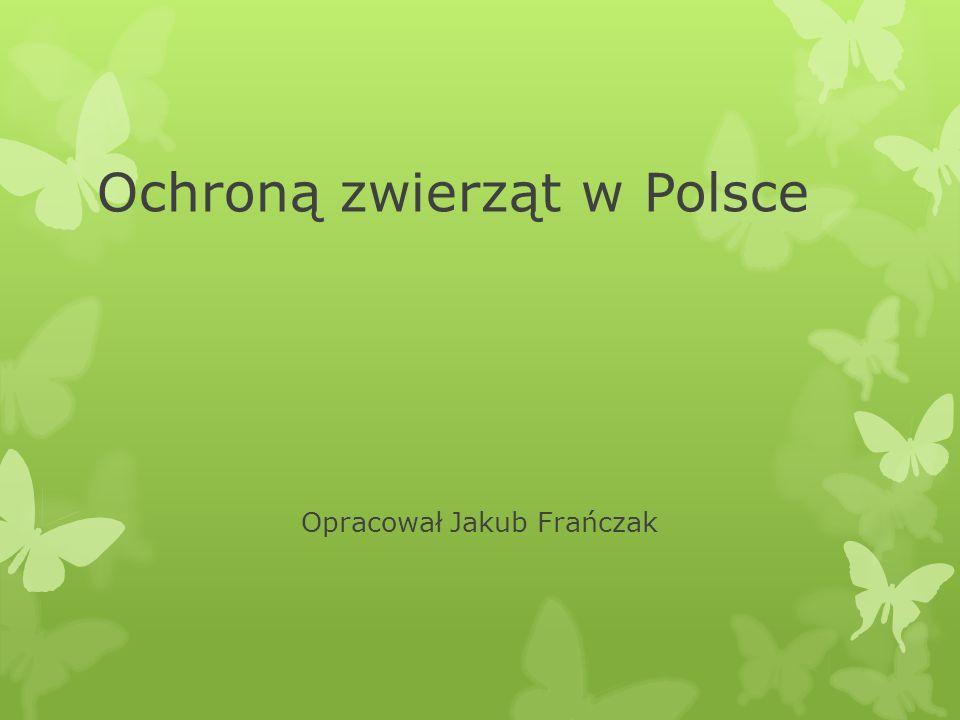 Ochroną zwierząt w Polsce Opracował Jakub Frańczak