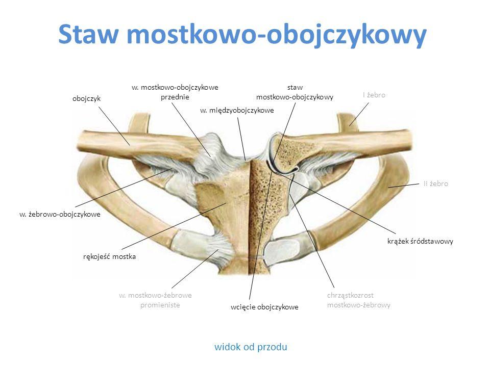 Połączenia kości przedramienia (c.d.) Staw promieniowo-łokciowy dalszy – powierzchnie stawowe na k.
