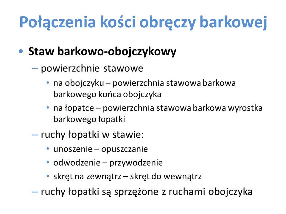 Połączenia kości obręczy barkowej Staw barkowo-obojczykowy – powierzchnie stawowe na obojczyku – powierzchnia stawowa barkowa barkowego końca obojczyk