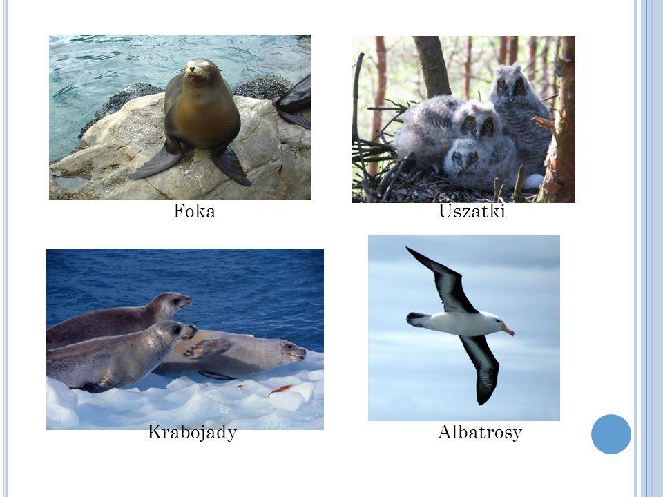 Petrele olbrzymie słonie morskie Płetwale karłowate Niedźwiedź polarny