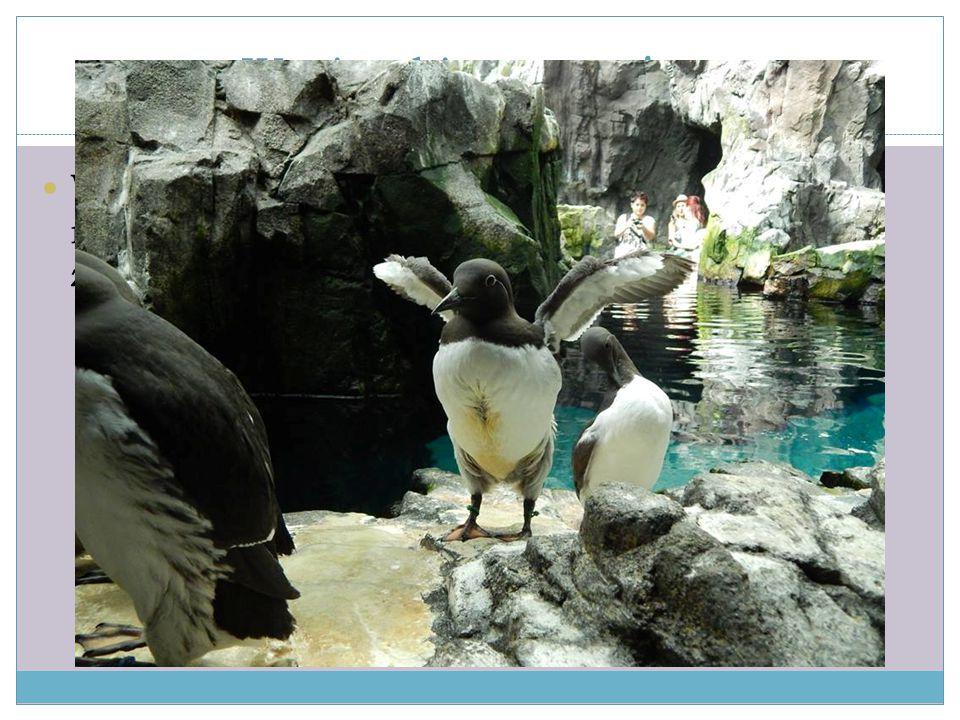 Wycieczki - oceanarium W sobotę odwiedziliśmy oceanarium, gdzie mieliśmy okazję oglądać zwierzęta z różnych zakątków świata.