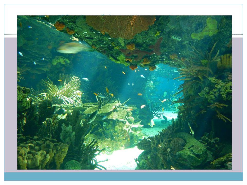 Wycieczki - oceanarium