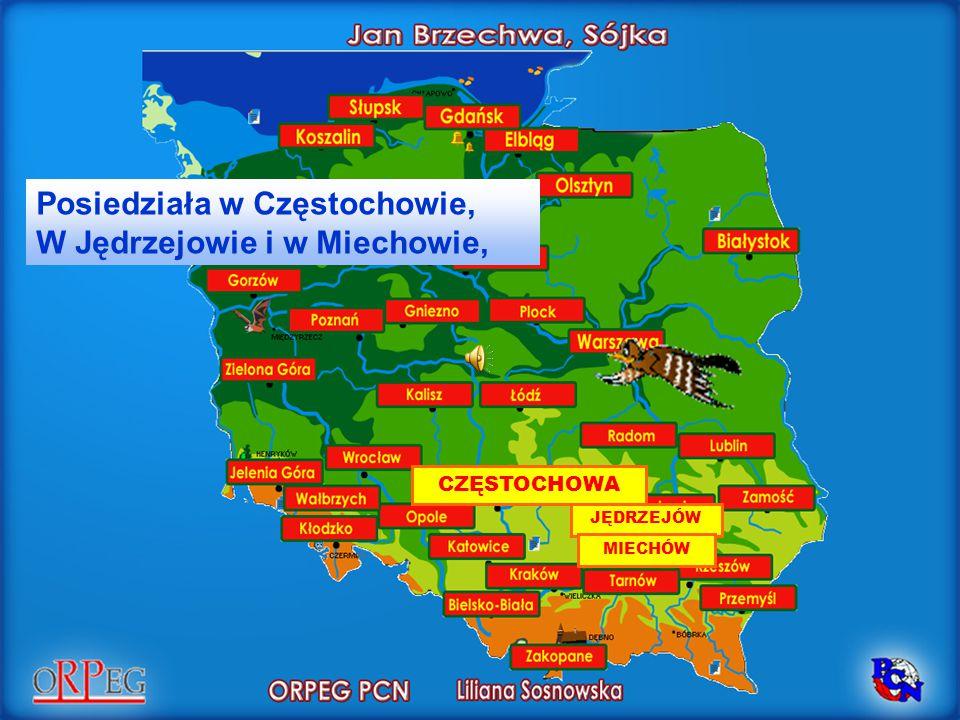 JĘDRZEJÓW Posiedziała w Częstochowie, W Jędrzejowie i w Miechowie, CZĘSTOCHOWA MIECHÓW