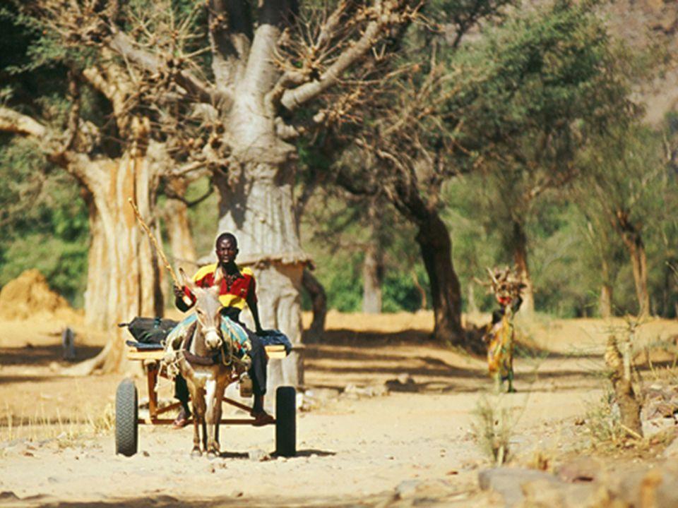 Historia O ich pochodzeniu wiadomo niewiele. Pewne jest jedynie to, że tereny Afryki Zachodniej nie były ich macierzystą ziemią. Najnowsze badania arc