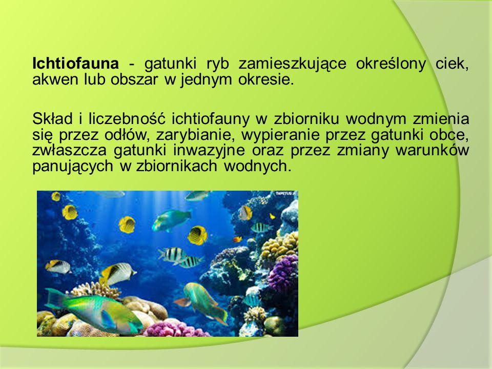 Ichtiofauna - gatunki ryb zamieszkujące określony ciek, akwen lub obszar w jednym okresie. Skład i liczebność ichtiofauny w zbiorniku wodnym zmienia s