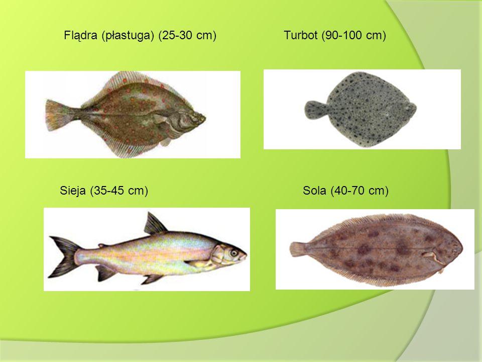 Flądra (płastuga) (25-30 cm)Turbot (90-100 cm) Sieja (35-45 cm)Sola (40-70 cm)