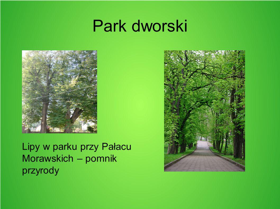Lipy w parku przy Pałacu Morawskich – pomnik przyrody Park dworski