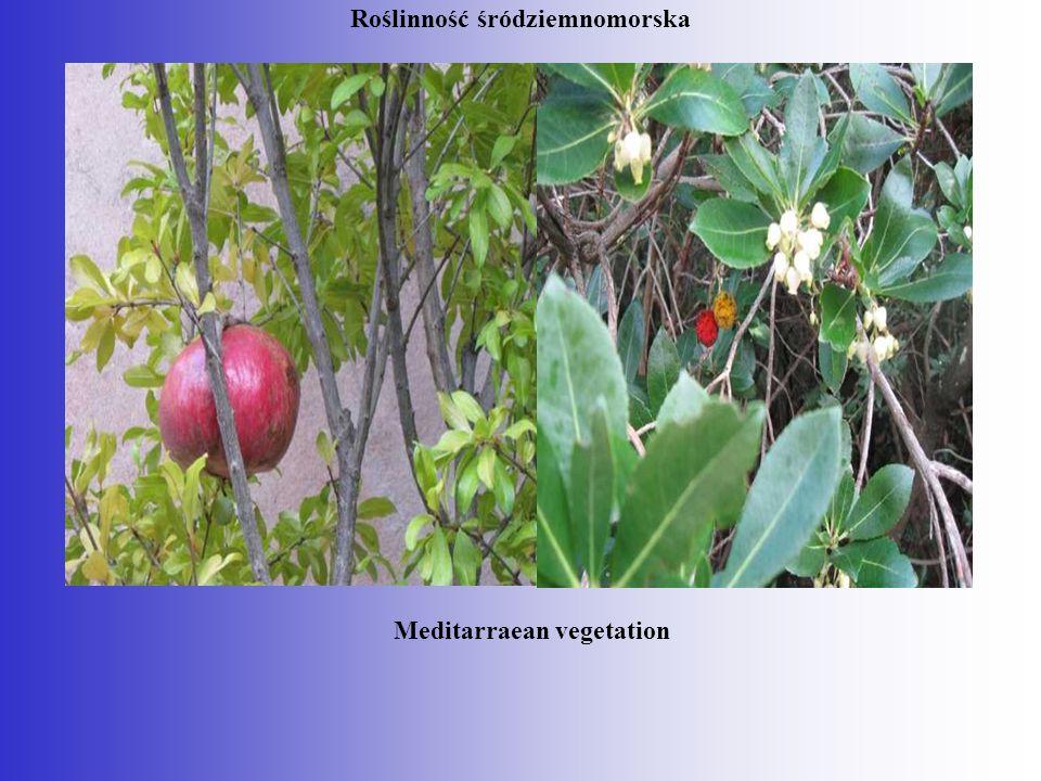 Roślinność śródziemnomorska Meditarraean vegetation
