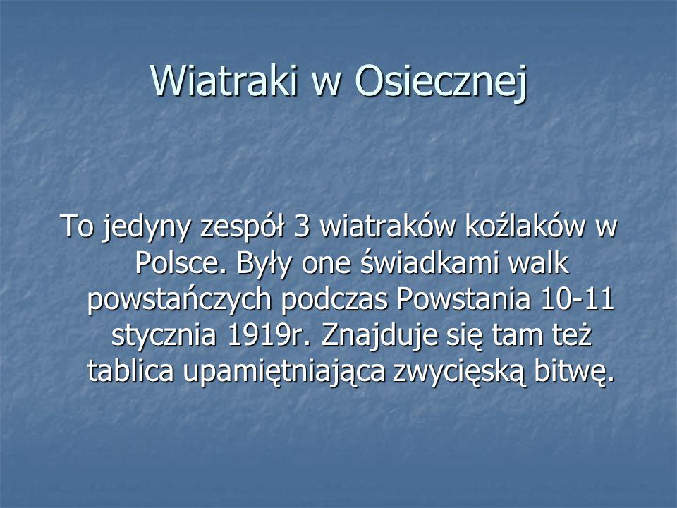 Wiatraki w Osiecznej To jedyny zespół 3 wiatraków koźlaków w Polsce. Były one świadkami walk powstańczych podczas Powstania 10-11 stycznia 1919r. Znaj