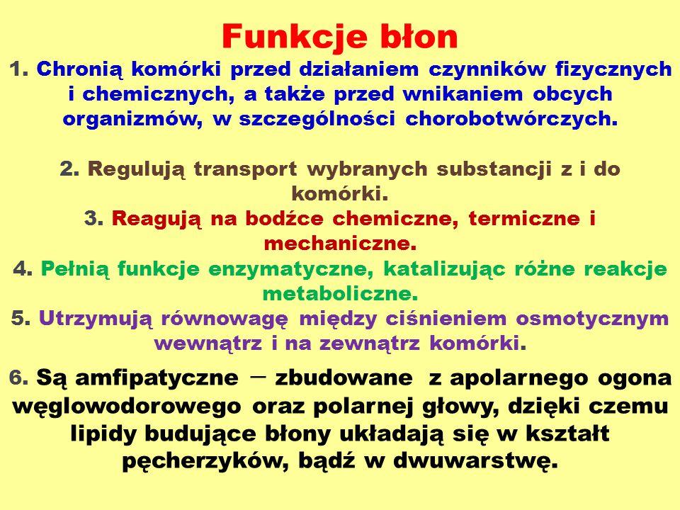 Funkcje błon 1. Chronią komórki przed działaniem czynników fizycznych i chemicznych, a także przed wnikaniem obcych organizmów, w szczególności chorob