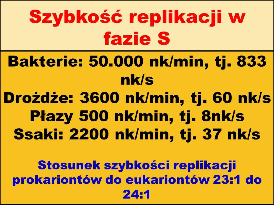 Szybkość replikacji w fazie S Bakterie: 50.000 nk/min, tj. 833 nk/s Drożdże: 3600 nk/min, tj. 60 nk/s Płazy 500 nk/min, tj. 8nk/s Ssaki: 2200 nk/min,