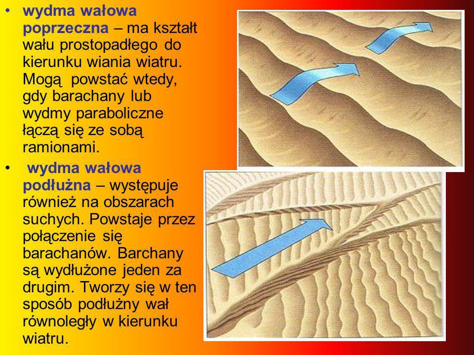 wydma wałowa poprzeczna – ma kształt wału prostopadłego do kierunku wiania wiatru. Mogą powstać wtedy, gdy barachany lub wydmy paraboliczne łączą się