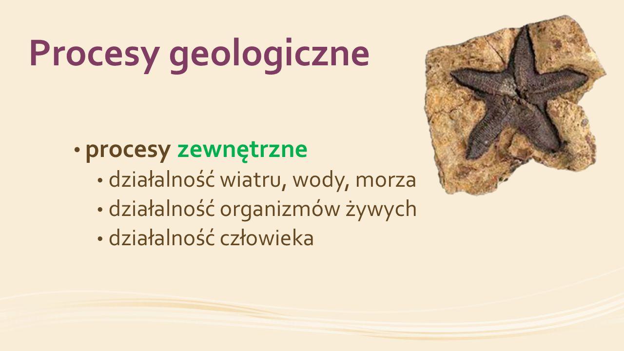 Procesy geologiczne procesy zewnętrzne działalność wiatru, wody, morza działalność organizmów żywych działalność człowieka