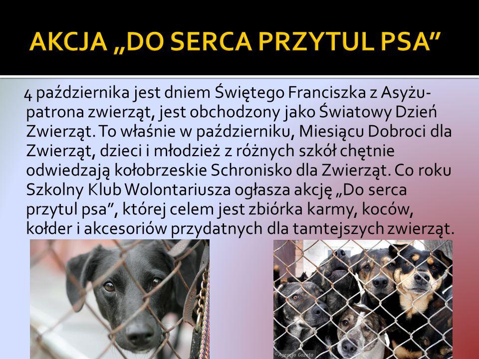 4 października jest dniem Świętego Franciszka z Asyżu- patrona zwierząt, jest obchodzony jako Światowy Dzień Zwierząt.