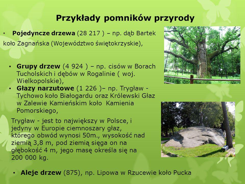 Przykłady pomników przyrody Pojedyncze drzewa (28 217 ) – np. dąb Bartek koło Zagnańska (Województwo świętokrzyskie), Grupy drzew (4 924 ) – np. cisów