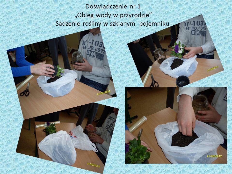 """Doświadczenie nr 1 """"Obieg wody w przyrodzie"""" Sadzenie rośliny w szklanym pojemniku."""