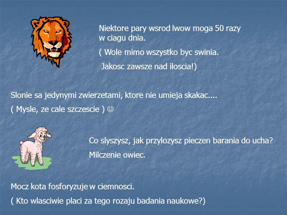 Niektore pary wsrod lwow moga 50 razy w ciagu dnia.