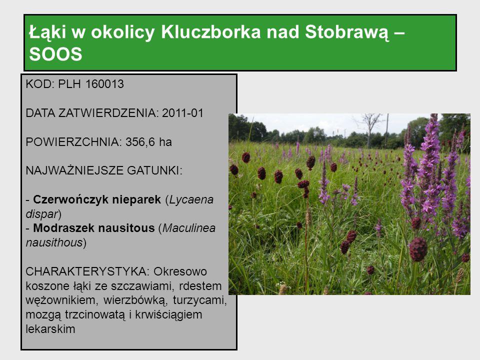 Łąki w okolicy Kluczborka nad Stobrawą – SOOS KOD: PLH 160013 DATA ZATWIERDZENIA: 2011-01 POWIERZCHNIA: 356,6 ha NAJWAŻNIEJSZE GATUNKI: - Czerwończyk