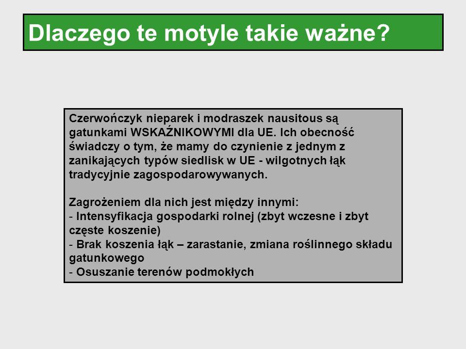 Dlaczego te motyle takie ważne? Czerwończyk nieparek i modraszek nausitous są gatunkami WSKAŹNIKOWYMI dla UE. Ich obecność świadczy o tym, że mamy do