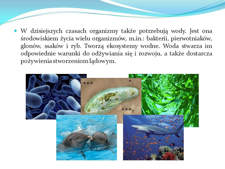 W dzisiejszych czasach organizmy także potrzebują wody. Jest ona środowiskiem życia wielu organizmów, m.in.: bakterii, pierwotniaków, glonów, ssaków i