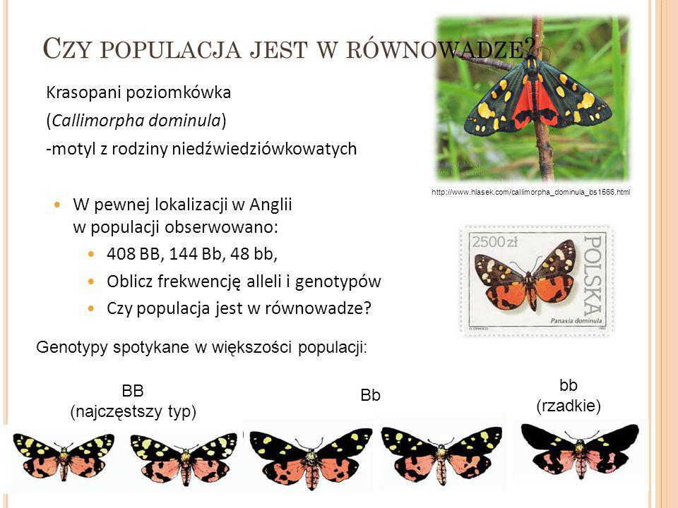 Krasopani poziomkówka (Callimorpha dominula) -motyl z rodziny niedźwiedziówkowatych W pewnej lokalizacji w Anglii w populacji obserwowano: 408 BB, 144