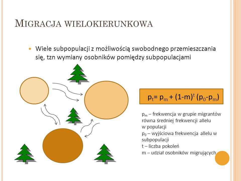 M IGRACJA WIELOKIERUNKOWA Wiele subpopulacji z możliwością swobodnego przemieszczania się, tzn wymiany osobników pomiędzy subpopulacjami p t = p m + (