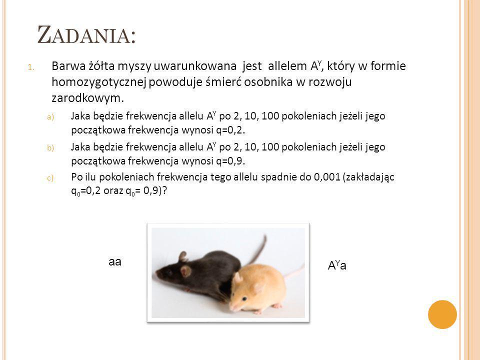 Z ADANIA : 1. Barwa żółta myszy uwarunkowana jest allelem A Y, który w formie homozygotycznej powoduje śmierć osobnika w rozwoju zarodkowym. a) Jaka b