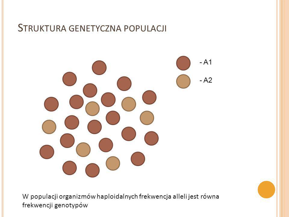 N – ogólna liczba osobników m – liczba alleli w danym locus A – umownie oznaczamy allel dominujący a – umownie oznaczamy allel recesywny Loci dwualleliczne: Frekwencja występowania genotypów: f(AA) = częstość występowania homozygot dominujących AA f(Aa) = częstość występowania heterozygot Aa f(aa) = częstość występowania homozygot recesywnych aa p = częstość alellu A, p=f(AA)+1/2f(Aa), p ≤1 q = częstość allelu a, q=R+1/2Q, q≤1 Loci wieloalleliczne – liczba możliwych genotypów: m(m+1)/2 S TRUKTURA GENETYCZNA POPULACJI p + q = 1