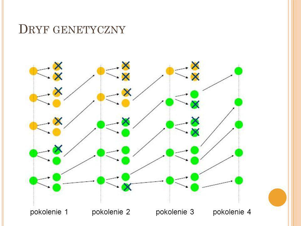 pokolenie 1pokolenie 2pokolenie 3pokolenie 4 D RYF GENETYCZNY