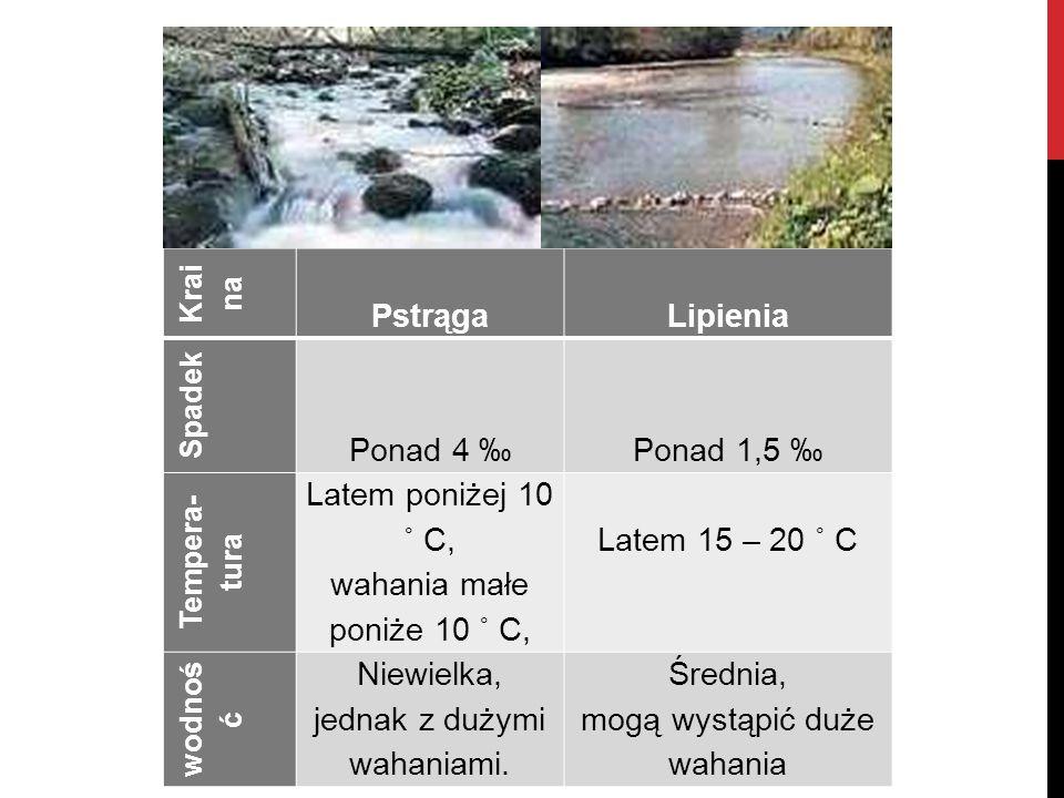 Krai na Pstrąga Lipienia Spadek Ponad 4 ‰ Ponad 1,5 ‰ Tempera- tura Latem poniżej 10 ˚ C, wahania małe poniże 10 ˚ C, Latem 15 – 20 ˚ C wodnoś ć Niewi